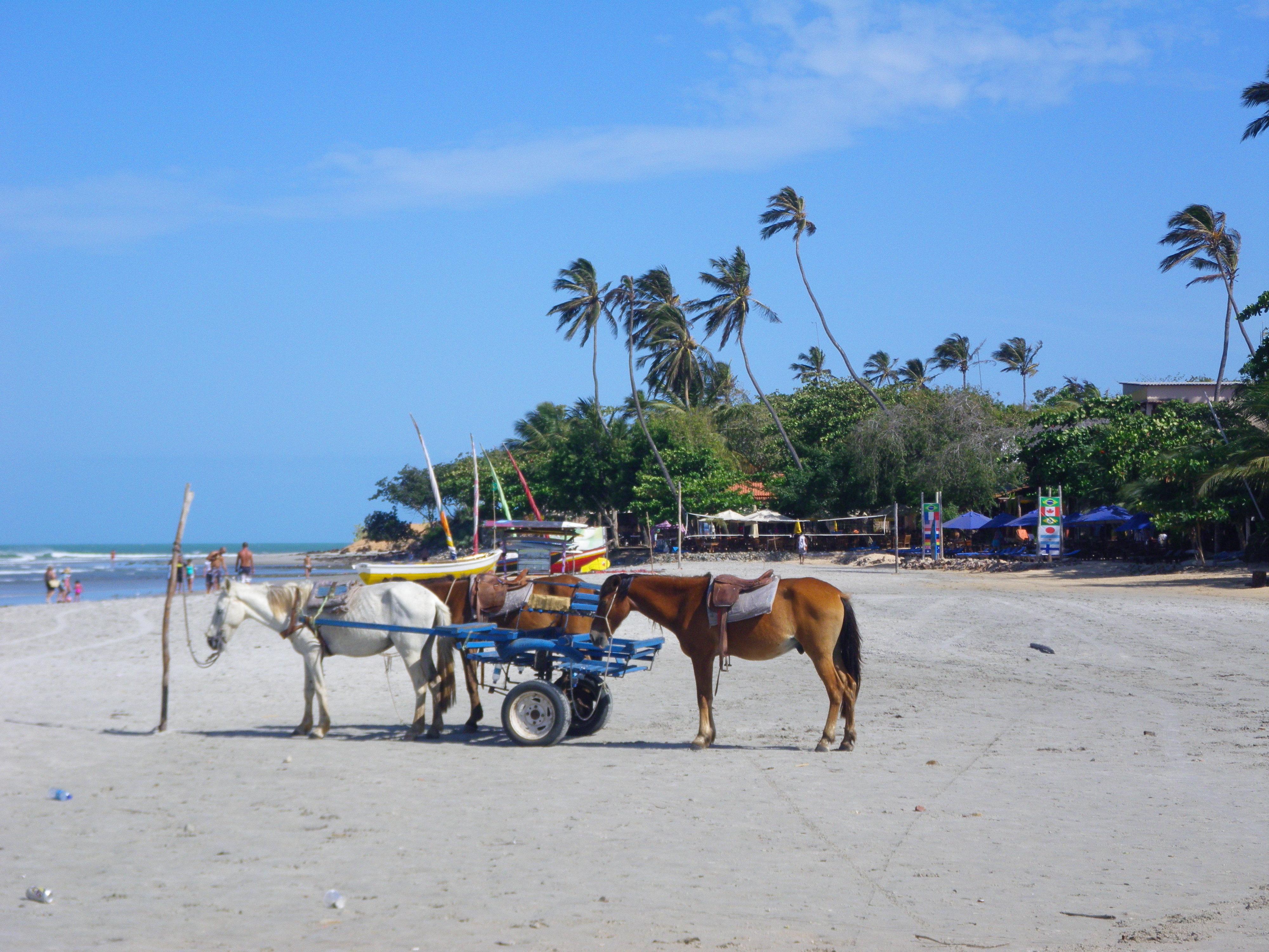 Esel am Strand