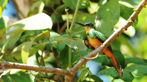 Pantanal Vogel