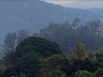 Brasilien Natur 01