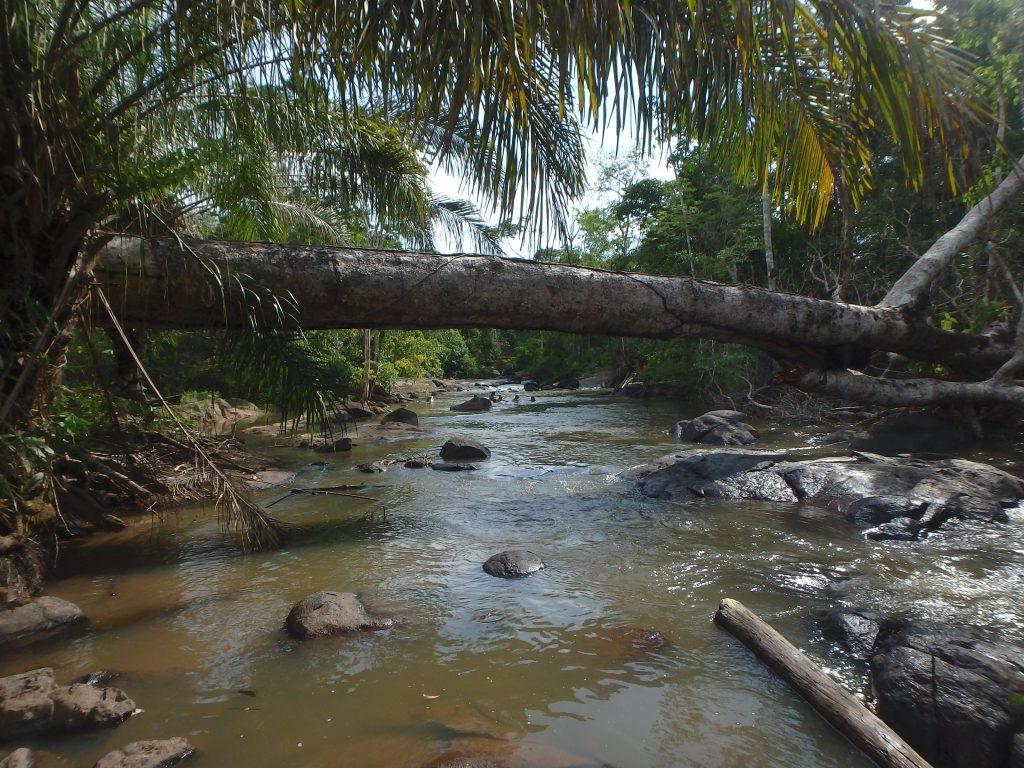 Pawentiga Suruí am Rio Lobo