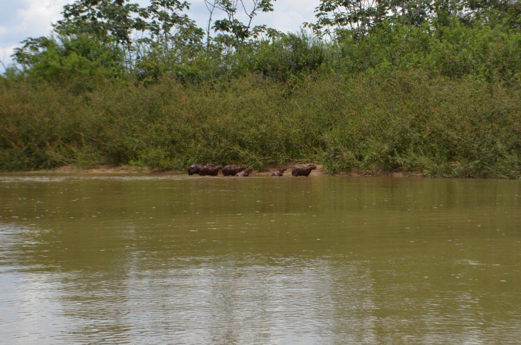 Am Rio Araguaia