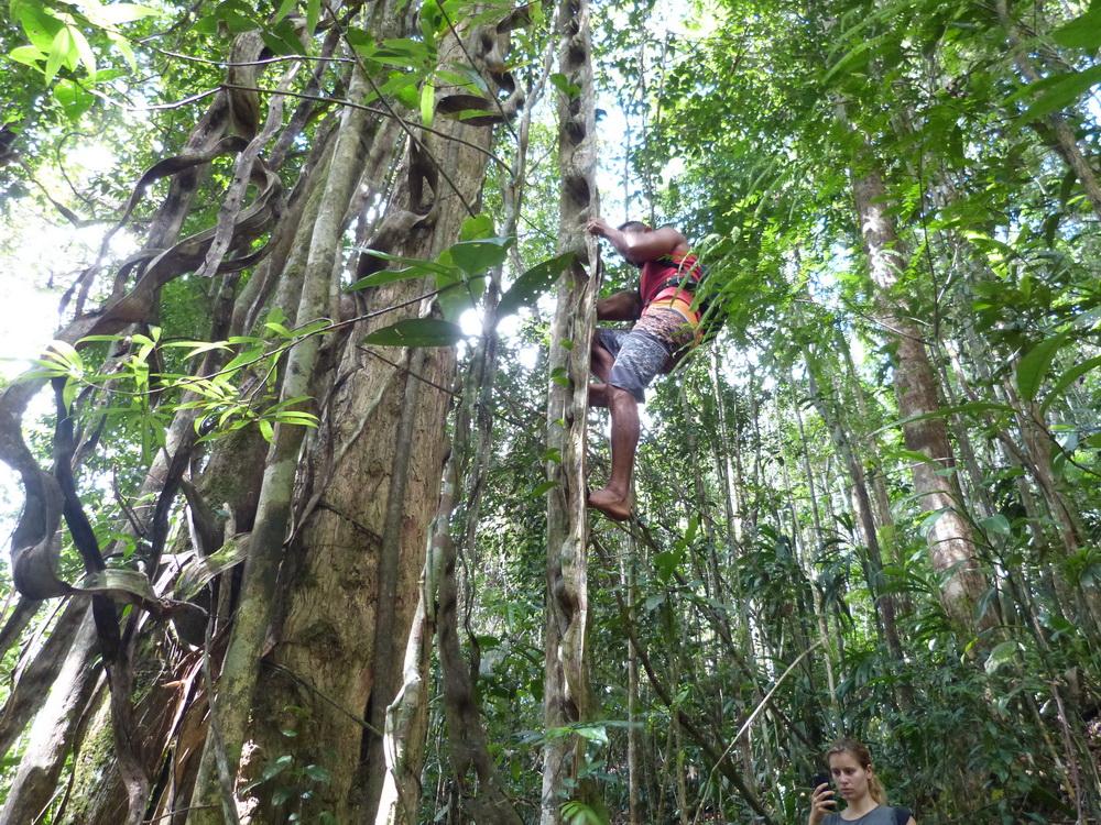Kakao Tour Bahia Baum