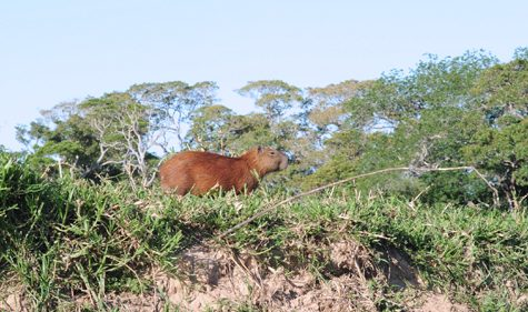 Pantanal Tiere