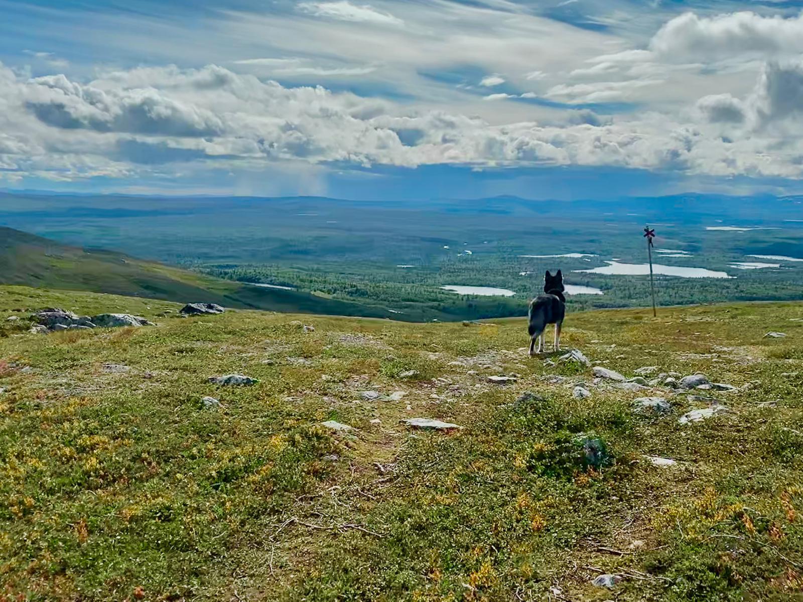 Lappland ruft